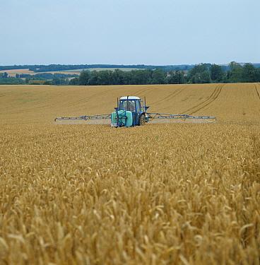 Ford tractor & Berthoud sprayer spraying ripe wheat crop pre-harvest for grass weed control  -  Nigel Cattlin/ FLPA
