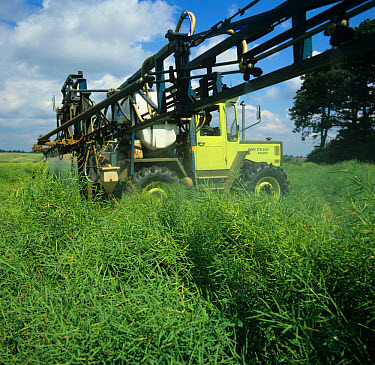 Spraying of oilseed rape crop with a dessicant, glyphosate, before harvest (used by Agchem sector until)  -  Nigel Cattlin/ FLPA