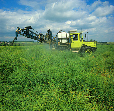 Spraying of oilseed rape crop with a dessicant, glyphosate, before harvest  -  Nigel Cattlin/ FLPA