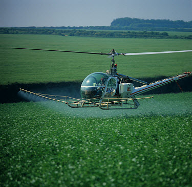 Bell helicopter spraying a flowering pea crop in Hampshire  -  Nigel Cattlin/ FLPA