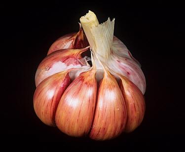 Garlic (Allium sativum) cloves in bulb with outer membrane removed  -  Nigel Cattlin/ FLPA
