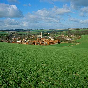 Young wheat crop in the foreground in winter with a Wiltshire village behind  -  Nigel Cattlin/ FLPA