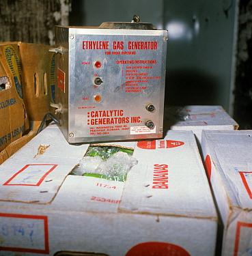 Ethylene gas generator in banana store, for ripening and storage of imported fruit  -  Nigel Cattlin/ FLPA
