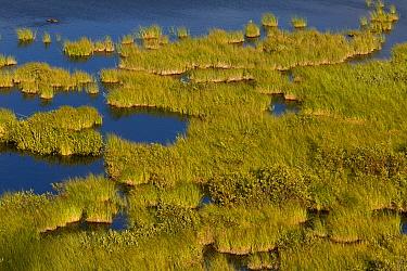 Lake and bog habitat, Cottonwood Slough, Jasper National Park, Rocky Mountains, Alberta, Canada, july  -  Bob Gibbons/ FLPA