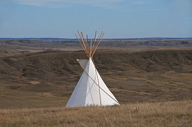 Teepee in shortgrass prairie habitat, West Bloc, Grasslands National Park, Southern Saskatchewan, Canada, october  -  Mark Newman/ FLPA