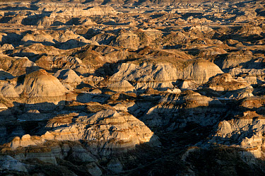 View of badlands habitat, Dinosaur Provincial Park, Alberta, Canada, october  -  Mark Newman/ FLPA