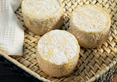 Crottin de Chevre, French cheese, made from goat milk  -  Gerard Lacz/ FLPA