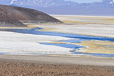 View of saltlake habitat at m altitude, with Andean Flamingo (Phoenicopterus andinus) flock in distance, Laguna Santa Rosa, Parque Nacional Nevado Tres Cruces, Atacama Region, Chile  -  Krystyna Szulecka/ FLPA