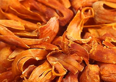 Nutmeg (Myristica fragrans) 'Mace', dried outer arils  -  Gerard Lacz/ FLPA