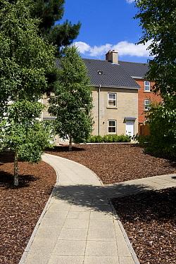 Modern housing development, urban gardens with paths and bark covering, Norwich, Norfolk, England, july  -  David Burton/ FLPA