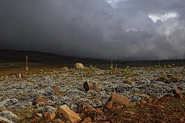 View of stormclouds over afro-alpine habitat, Sanetti Plateau, Bale Mountains National Park, Oromia, Ethiopia  -  Ignacio Yufera/ FLPA
