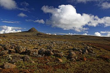 View of afro-alpine habitat, Sanetti Plateau, Bale Mountains National Park, Oromia, Ethiopia  -  Ignacio Yufera/ FLPA
