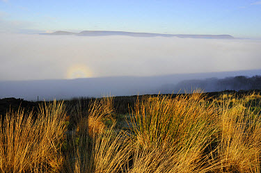 Brocken spectre seen from hilltop, appears when sun shines from behind person who is looking down from ridge or peak into mist or fog, Jeffrey Hill, Longridge, Lancashire, England, january  -  John Eveson/ FLPA