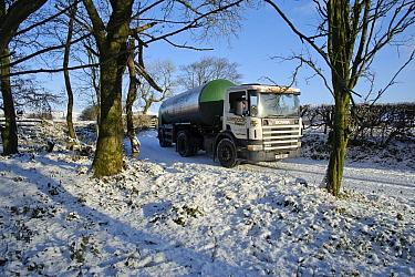 Milk tanker driving down snow covered farm track, Whitewell, Lancashire, England, november  -  John Eveson/ FLPA