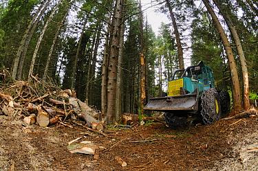 Timberjack c skidder, during logging in coniferous forest, Italian Alps, Italy, may  -  Fabio Pupin/ FLPA