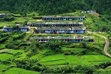 View of tea plantation workers housing on hillside, Munnar, Western Ghats, Kerala, India  -  Parameswaran Pillai Karunakaran/