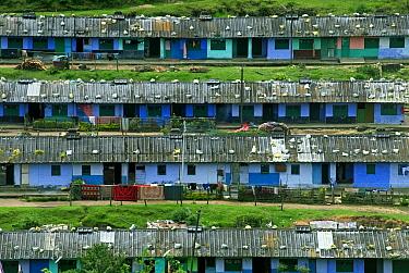 Tea plantation workers housing on hillside, Munnar, Western Ghats, Kerala, India  -  Parameswaran Pillai Karunakaran/