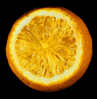 Granulation and abnomal thickening of the cell walls in an orange  -  Nigel Cattlin/ FLPA