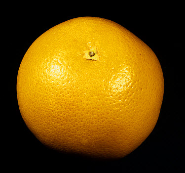 Whole citrus fruit grapefruit variety Red Blush  -  Nigel Cattlin/ FLPA