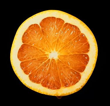 Cut section of a citrus fruit grapefruit variety Red Blush  -  Nigel Cattlin/ FLPA