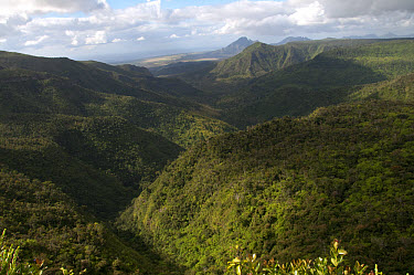 View of forested hillside habitat, Black River Gorges National Park, Black River District, West Mauritius  -  Colin Marshall/ FLPA