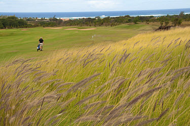 Grass growing on rough of golf course, golfer pulling golf cart in background, Le Telfair Hotel and Golf Course, Bel Ombre, Southwest Mauritius  -  Colin Marshall/ FLPA