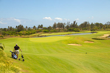 Golfer pulling golf cart across golf course, Le Telfair Hotel and Golf Course, Bel Ombre, Southwest Mauritius  -  Colin Marshall/ FLPA