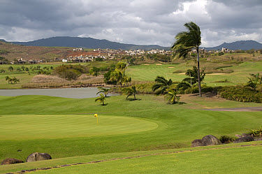 View of practice green on golf course, Le Telfair Hotel and Golf Course, Bel Ombre, Southwest Mauritius  -  Colin Marshall/ FLPA