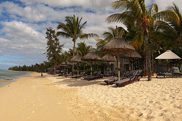 Sandy beach with sunloungers, sunshades and hotel building, Le Telfair Hotel, Bel Ombre, Southwest Mauritius  -  Colin Marshall/ FLPA