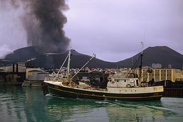 Fishing boat leaving harbour, with ash raising from erupting volcano in background, Eldfell Volcano, Heimaey, Westmann Isles, Iceland,  -  S Jonasson/ FLPA