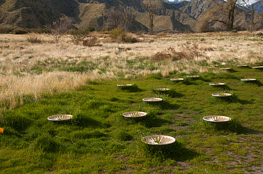 Groasis Waterboxx, plastic boxes designed to help grow trees in desert, Whitewater Preserve, Southern California  -  Mark Newman/ FLPA