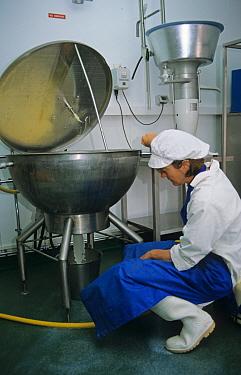 Dairy farming, worker filtering milk in parlour, Prosperous Home Farm, Hungerford, Berkshire, England  -  Rosie Jordan/ FLPA