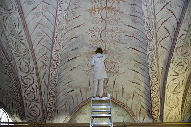 Curator repairing painting on church ceiling, Tierp, Uppsala County, Uppland, Sweden, march  -  Bjorn Ullhagen/ FLPA