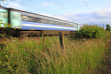 Tall grass growing in wasteground habitat between edge of railway track with passing train and arable field, Bacton, Suffolk, England, june  -  Marcus Webb/ FLPA