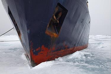Origo' icebreaker moored in pack ice, Arctic Sea, Svalbard, september  -  Bernd Rohrschneider/ FLPA