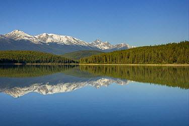 View of mountains reflected in lake, Trident Range, Patricia Lake, Jasper National Park, Rocky Mountains, Alberta, Canada, june  -  Bill Coster/ FLPA
