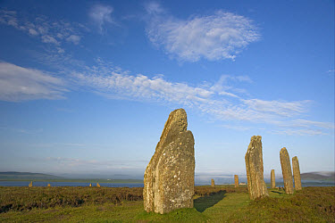 Neolithic stone circle, Ring of Brodgar, Mainland, Orkney, Scotland, june  -  Bill Coster/ FLPA