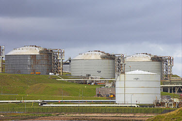 Storage tanks at coastal oil and liquefied gas terminal, Sullom Voe Oil Terminal, Sullom Voe, Mainland, Shetland Islands, Scotland  -  Bill Coster/ FLPA
