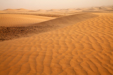 View of desert sand dunes with windblown sand, Sahara, Morocco, may  -  Bernd Rohrschneider/ FLPA