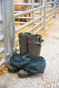 Farmers wellington boots and waterproof trousers outside pens at livestock market, Welshpool Livestock Market, Powys, Wales, august  -  John Eveson/ FLPA