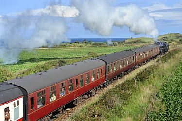 Steam railway, train with carriages, 'Poppy Line' coastal steam railway line, Weybourne, North Norfolk, England, september  -  Gary K Smith/ FLPA
