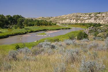 View of river flowing through ranch country, Little Missouri River, Badlands, North Dakota, U.S.A., august  -  Daphne Kinzler/ FLPA