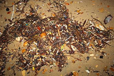 Cigarette butts on beach strandline, Bournemouth, Dorset, England, october  -  Steve Trewhella/ FLPA