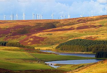 Wind turbines on hill above reservoir, Whiteadder Reservoir, Lammermuir Hills, Scottish Borders, Scotland, september  -  Phil McLean/ FLPA