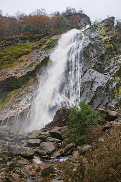 View of 'horsetail' waterfall flowing over rocks, highest waterfall in Ireland, Powerscourt Waterfall, River Dargle, Powerscourt Estate, Enniskerry, County Wicklow, Ireland, november  -  John Eveson/ FLPA