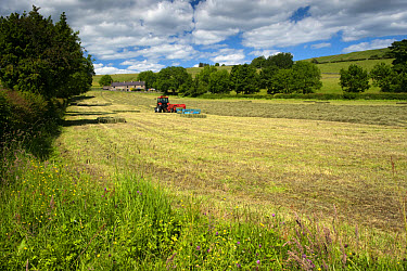 Zetor Proxima tractor with flat eight bale system, baling in traditional hay meadow, with strip of unmown grass around meadow edge to help encourage wildlife, Upper Teesdale, County Durham, England, j...  -  Wayne Hutchinson/ FLPA