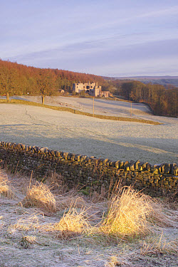 Drystone wall and frosted grasses, with remains of th Century hunting lodge in distance, Barden Tower, Barden, Wharfedale, Yorkshire Dales National Park, North Yorkshire, England, january  -  Paul Miguel/ FLPA