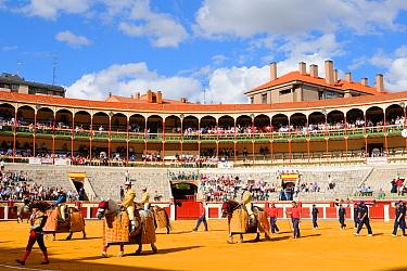 Bullfighting, Picadors parading in bullring at beginning of event, Spain, september  -  Fabio Pupin/ FLPA