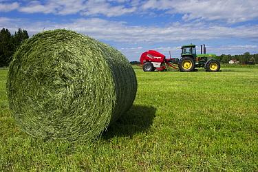Round silage bale, with John Deere tractor and Welger baler, Sweden, june  -  Bjorn Ullhagen/ FLPA
