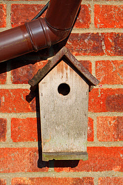 Wooden tit nestbox, attached to brick wall in garden, Mendlesham, Suffolk, England, january  -  Marcus Webb/ FLPA